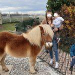 Visite des animaux de la résidence